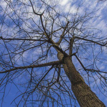 chongming, tree, winter, Canon EOS 550D