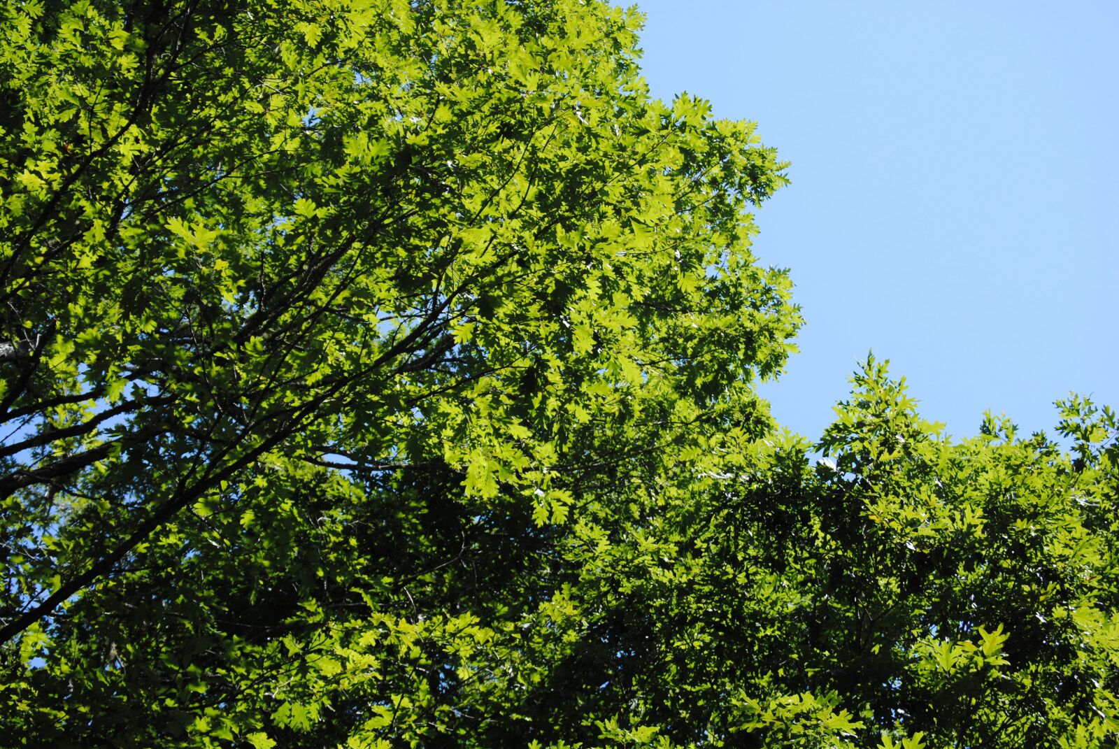 "Nikon D3000 sample photo. ""Trees, green, sky"" photography"