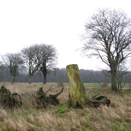 autumn, fallen, tree, forest, Canon POWERSHOT A710 IS