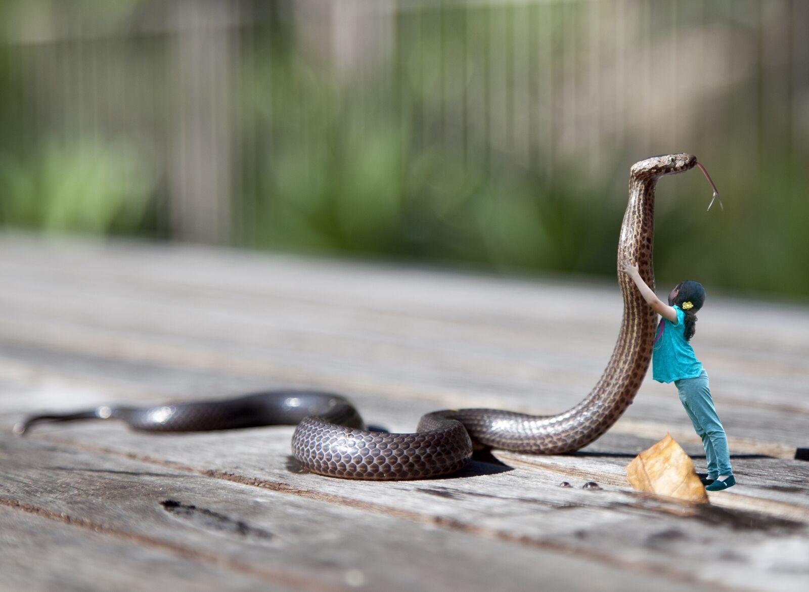 nature, snake, wood photography