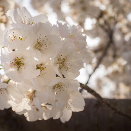 flowers, nature, plants, Sony NEX-5N