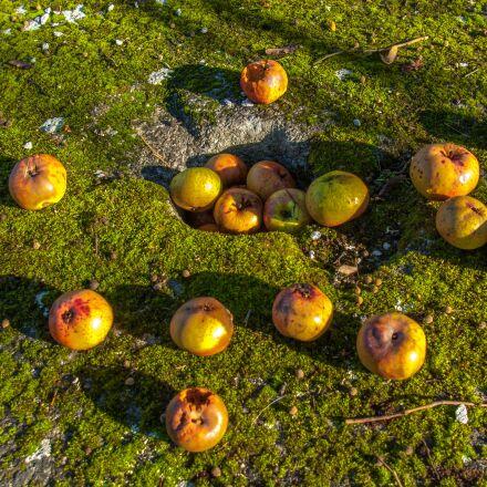 apple, fruit, lichen, Pentax K10D