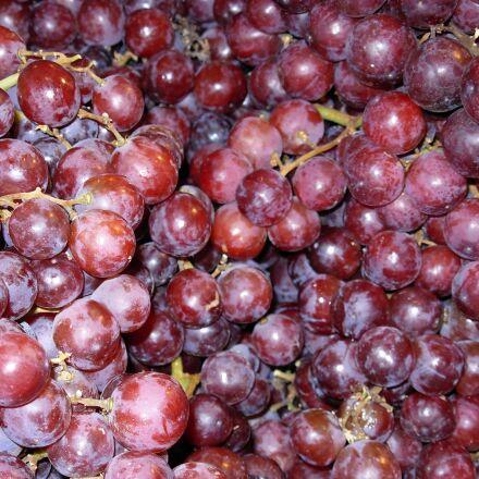grapes, purple, fruit, Nikon COOLPIX L5