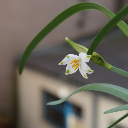 flower, nature, no person, Sony NEX-3N