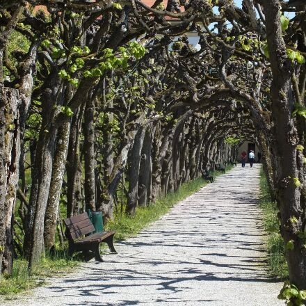 trees, avenue, away, Fujifilm FinePix HS25EXR