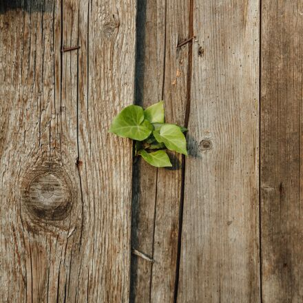 abandoned, fence, green leaves, Canon EOS 5D MARK III