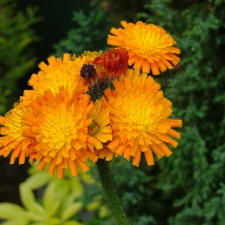 flowers, nature, flowering, Fujifilm FinePix S5000