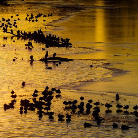 animals, ducks, geese, Panasonic DMC-G70