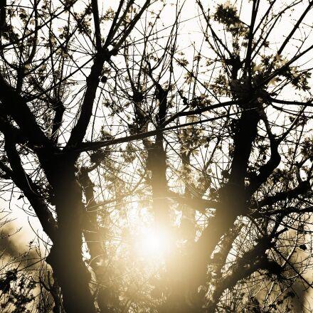dusk, tree, dry, Canon POWERSHOT SD1400 IS