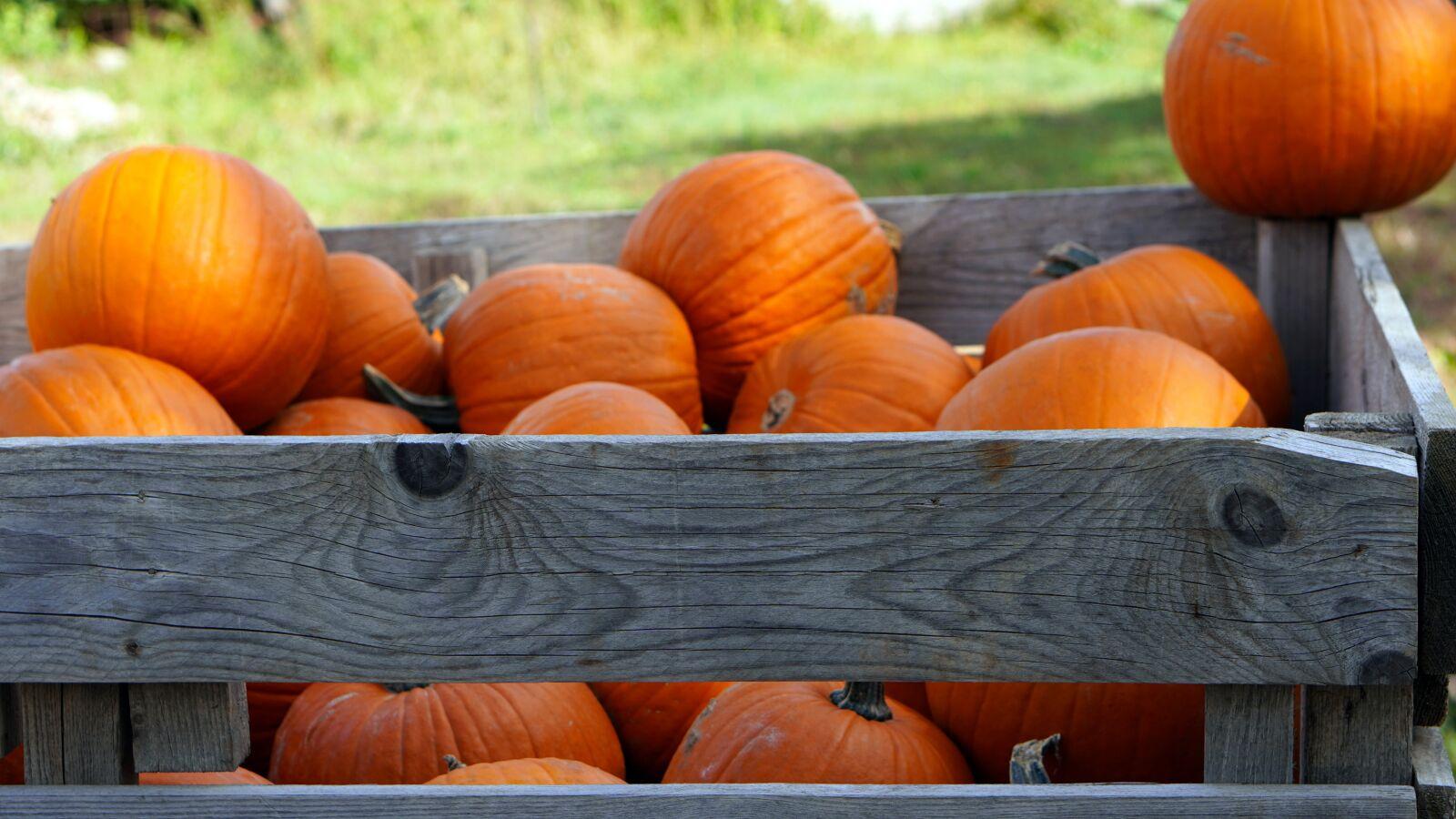 pumpkin, box, harvest
