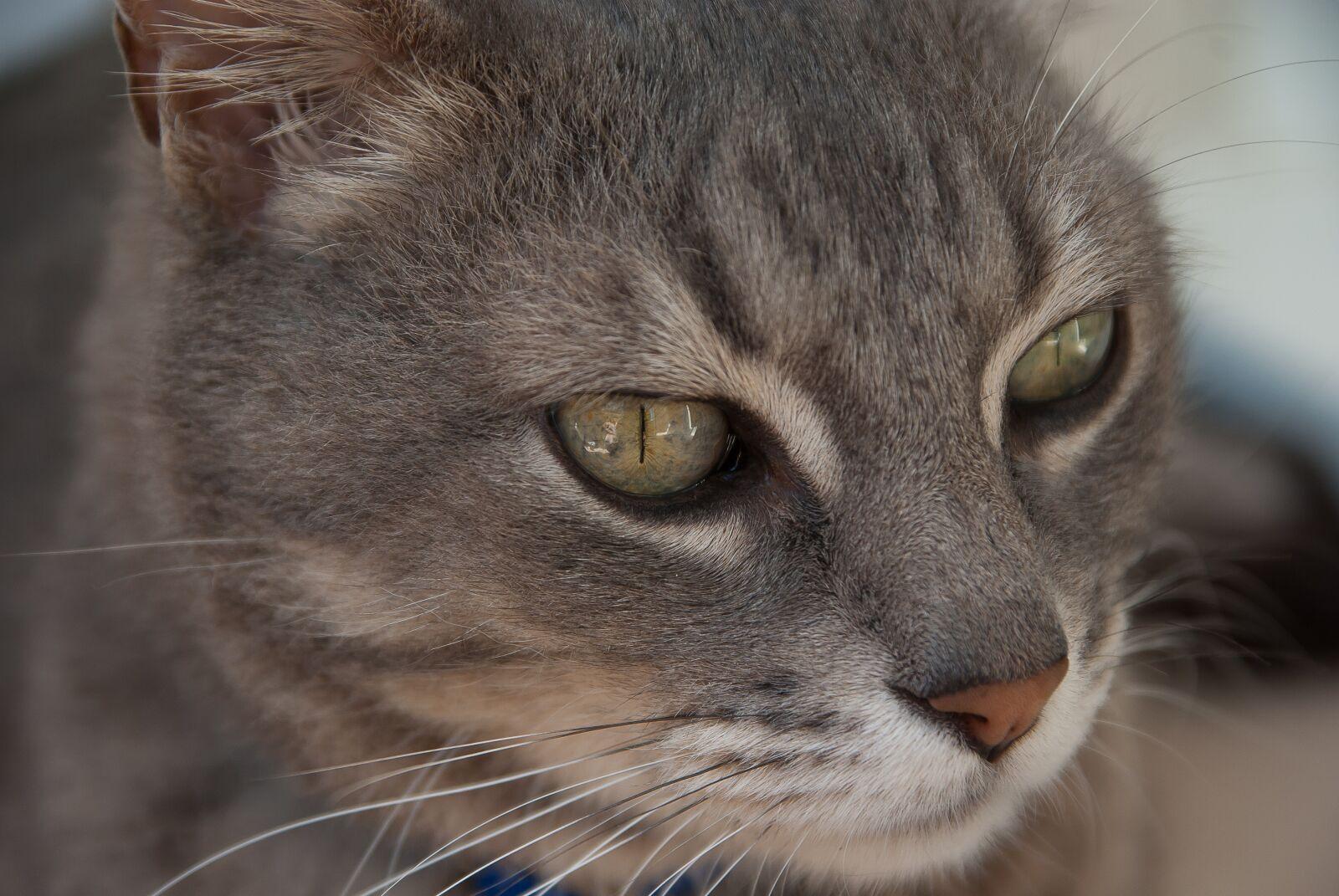 """Pentax K10D sample photo. """"Cat, feline, moustache"""" photography"""