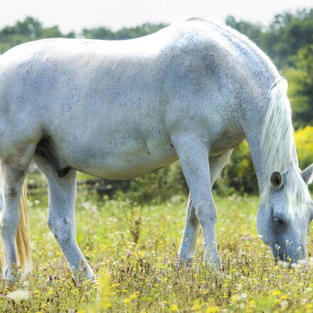 animals, green, horse, Canon EOS 1100D
