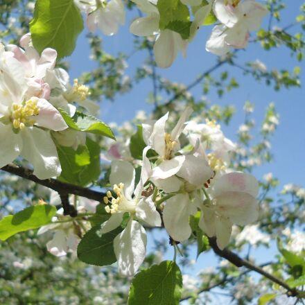 spring, nature, tree, Sony DSC-W510