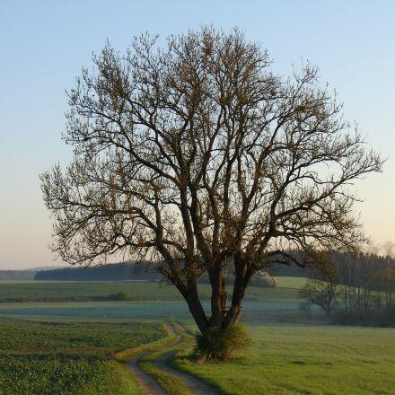 tree, landscape, nature, Sony DSC-V3