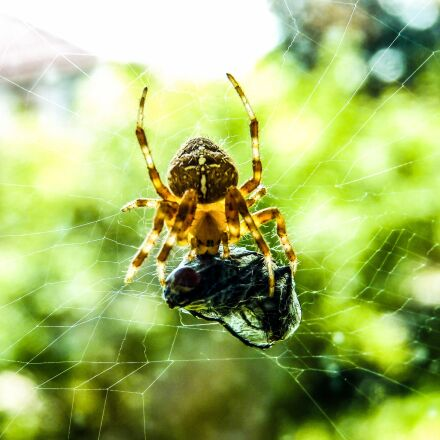 nature, insect, spider, Panasonic DMC-FZ38