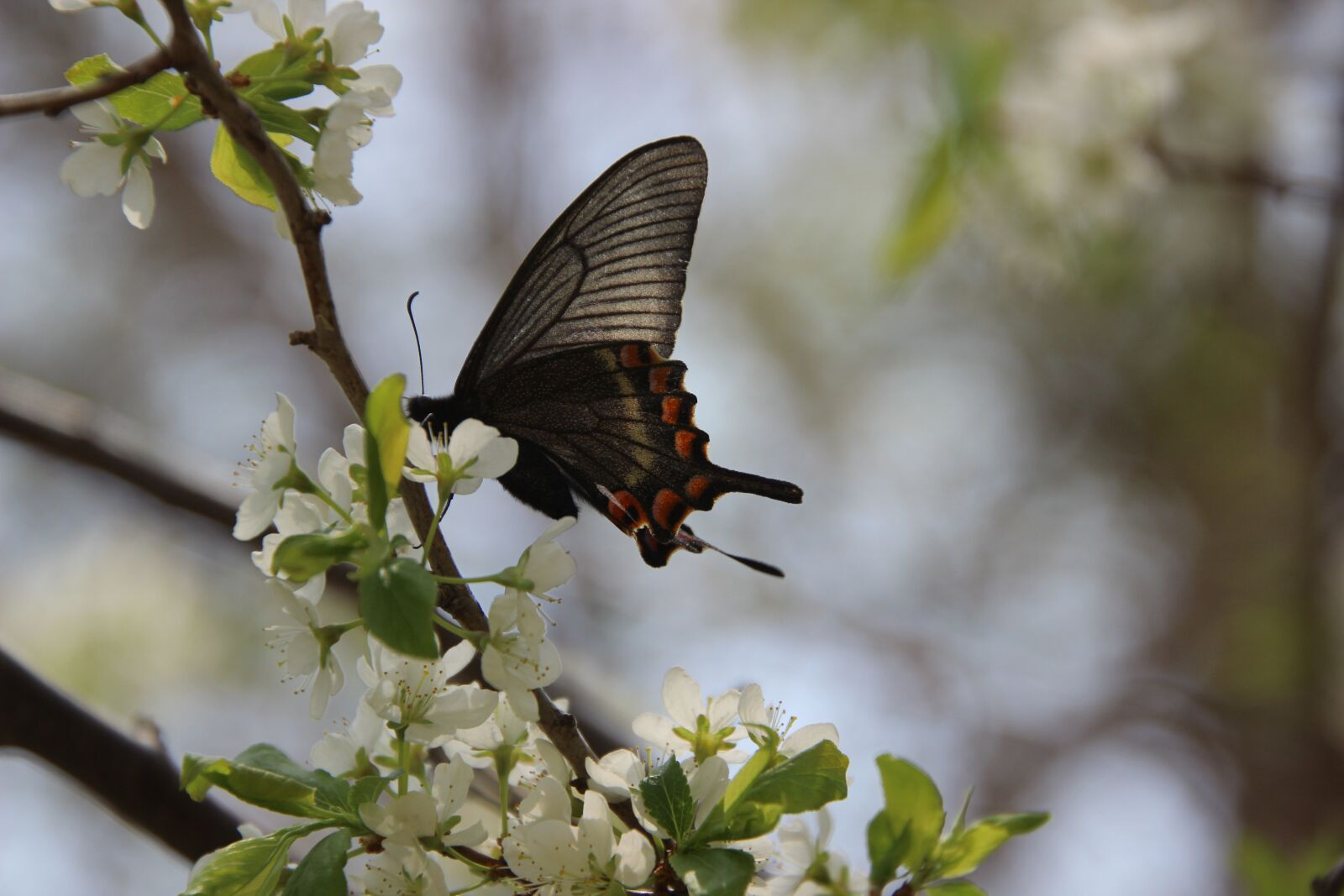 """Canon EOS 600D (Rebel EOS T3i / EOS Kiss X5) sample photo. """"Nature, flowers, butterfly"""" photography"""