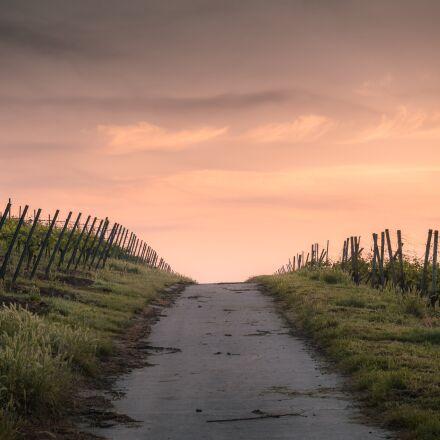 countryside, crops, dawn, RICOH PENTAX K-S2
