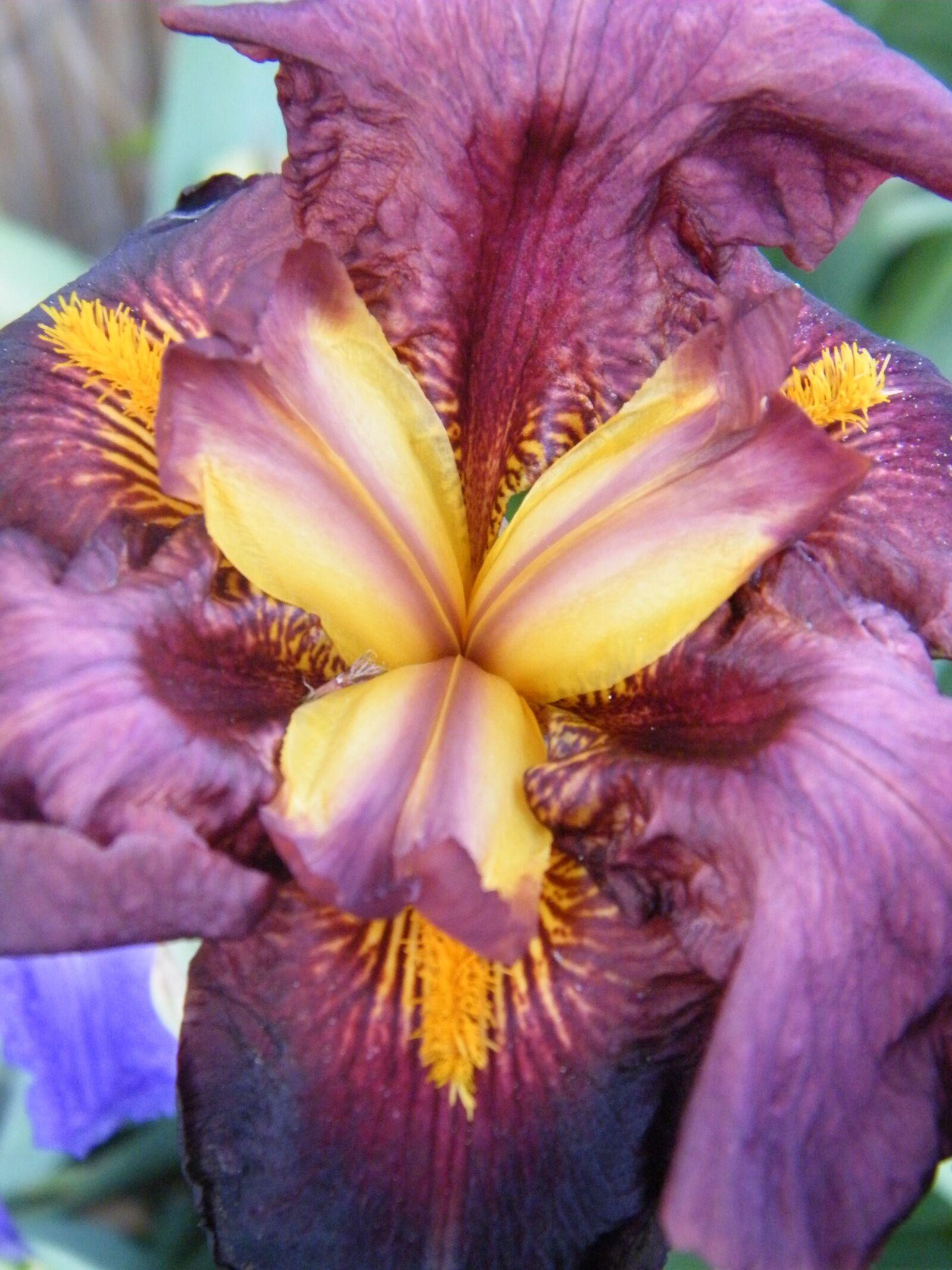 "Fujifilm FinePix S2000HD sample photo. ""Iris, macro, color"" photography"