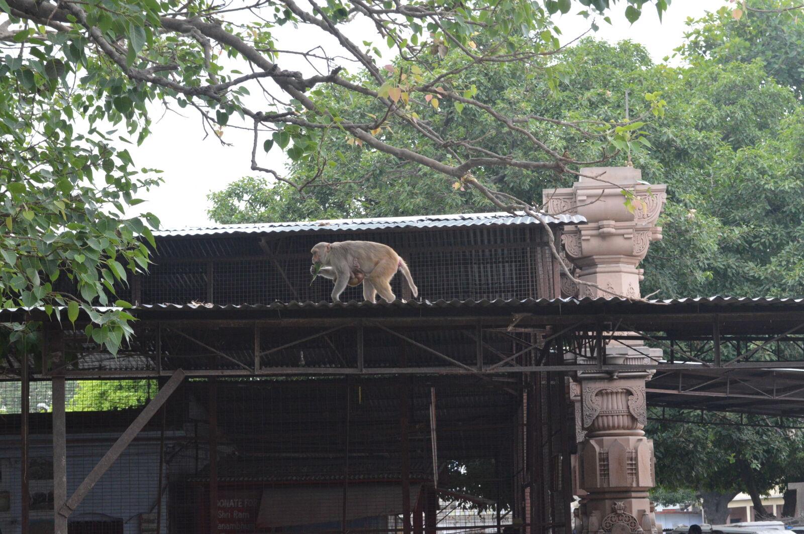 "Nikon D3200 sample photo. ""Monkey, temple"" photography"