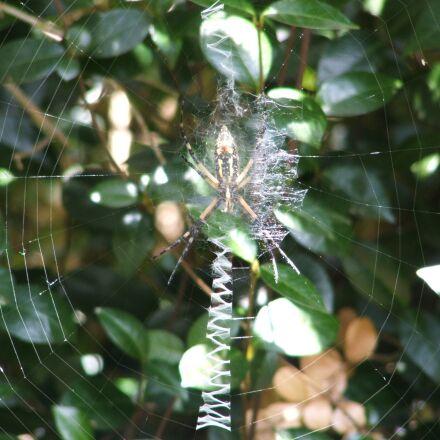 spider, spiderweb, web, Fujifilm FinePix S3100