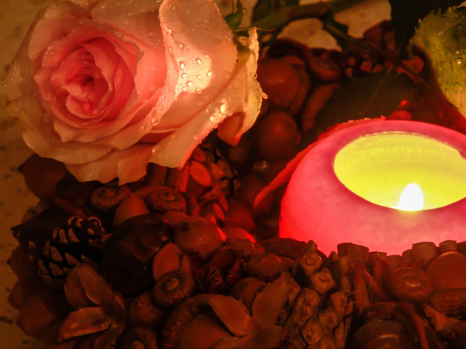 "Canon EOS 60D sample photo. ""Flower, rose, romance"" photography"