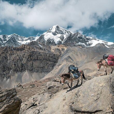 mountain, nature, mules, Panasonic DMC-GF2