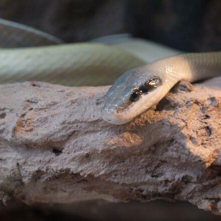 snake, animal, wildlife, Fujifilm X-A1