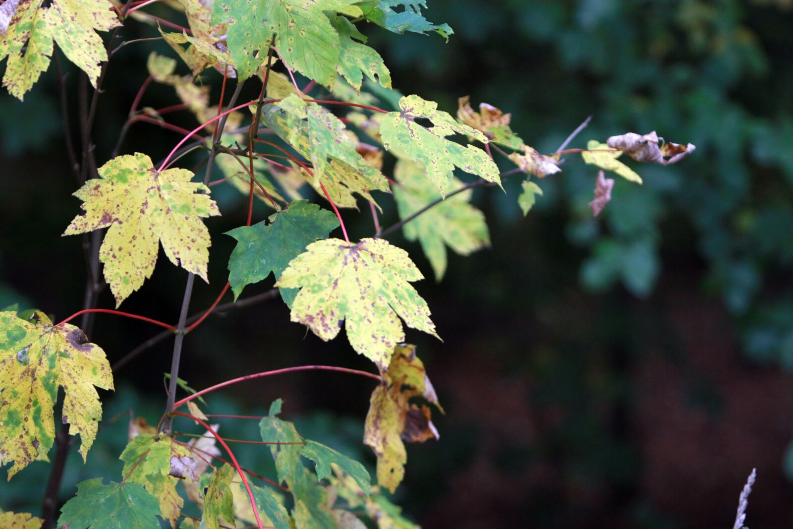 Canon EOS 60D sample photo