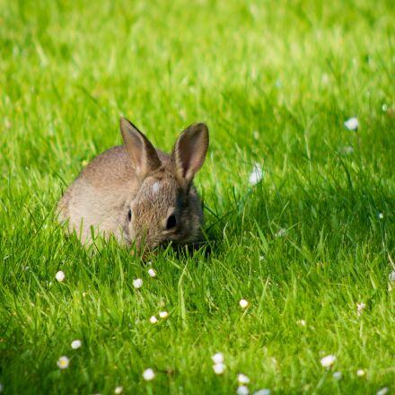 rabbit, grass, meadow, Pentax K-50