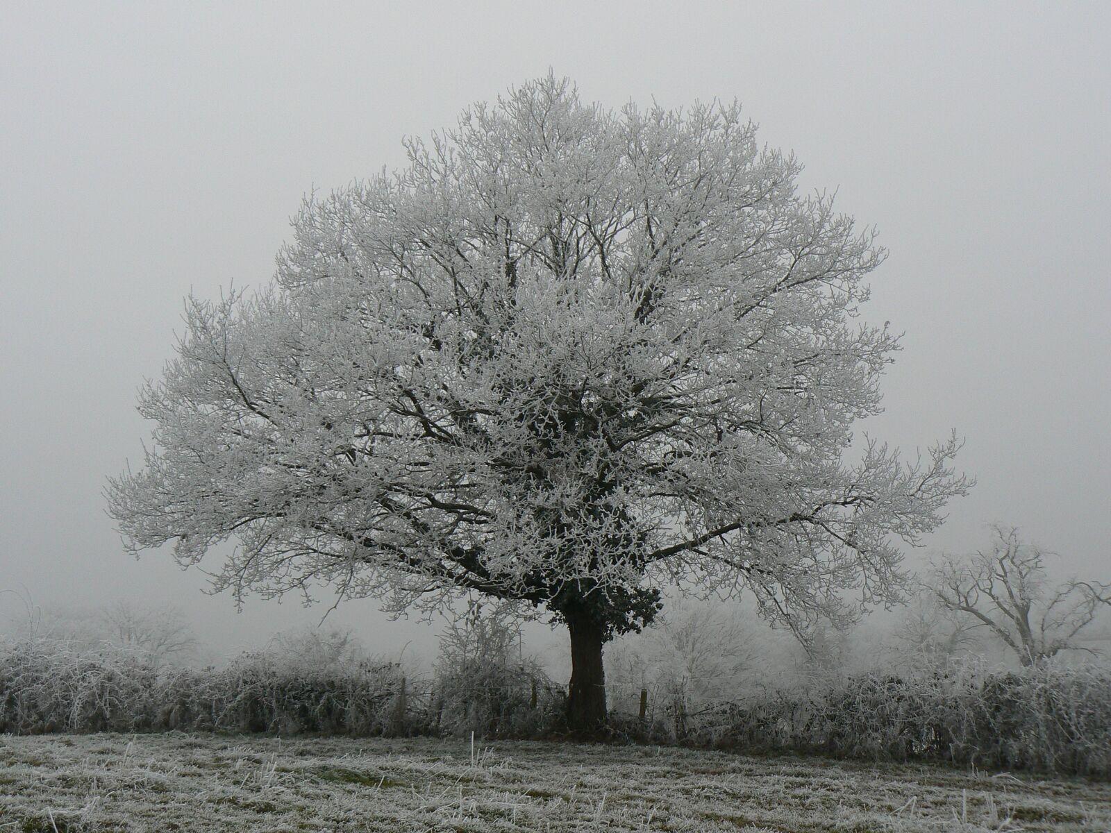 "Panasonic DMC-FZ7 sample photo. ""Tree, landscape, fog"" photography"