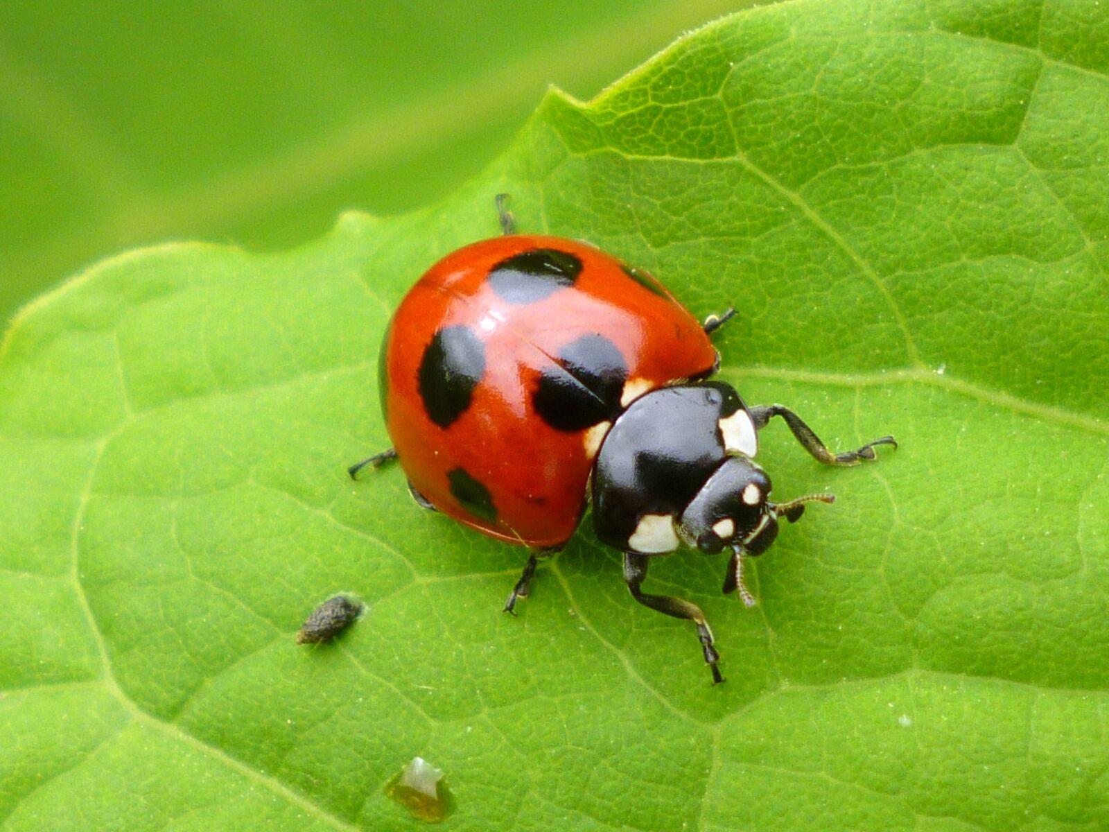 """Panasonic DMC-FH5 sample photo. """"Bug, beetle, natural"""" photography"""