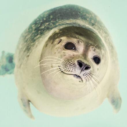 sea, animal, dog, zoo, Nikon D7000