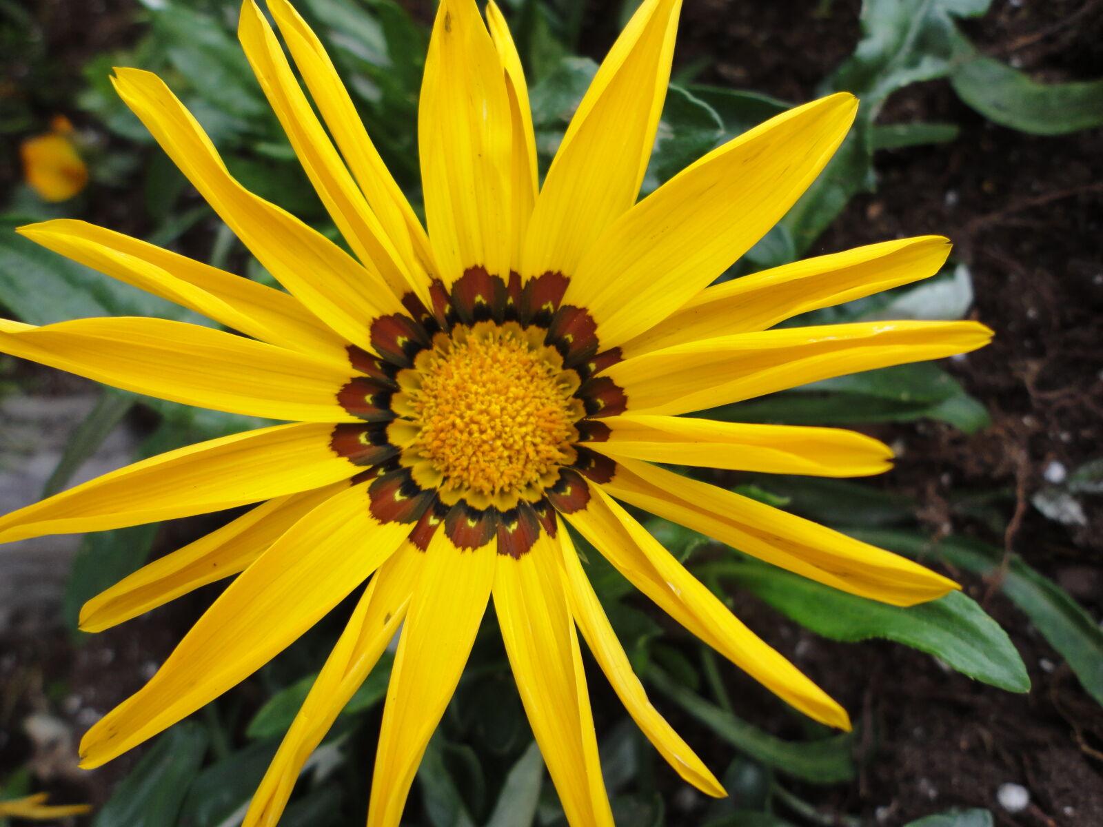 "Sony DSC-W350 sample photo. ""Daisy, flower, yellow"" photography"