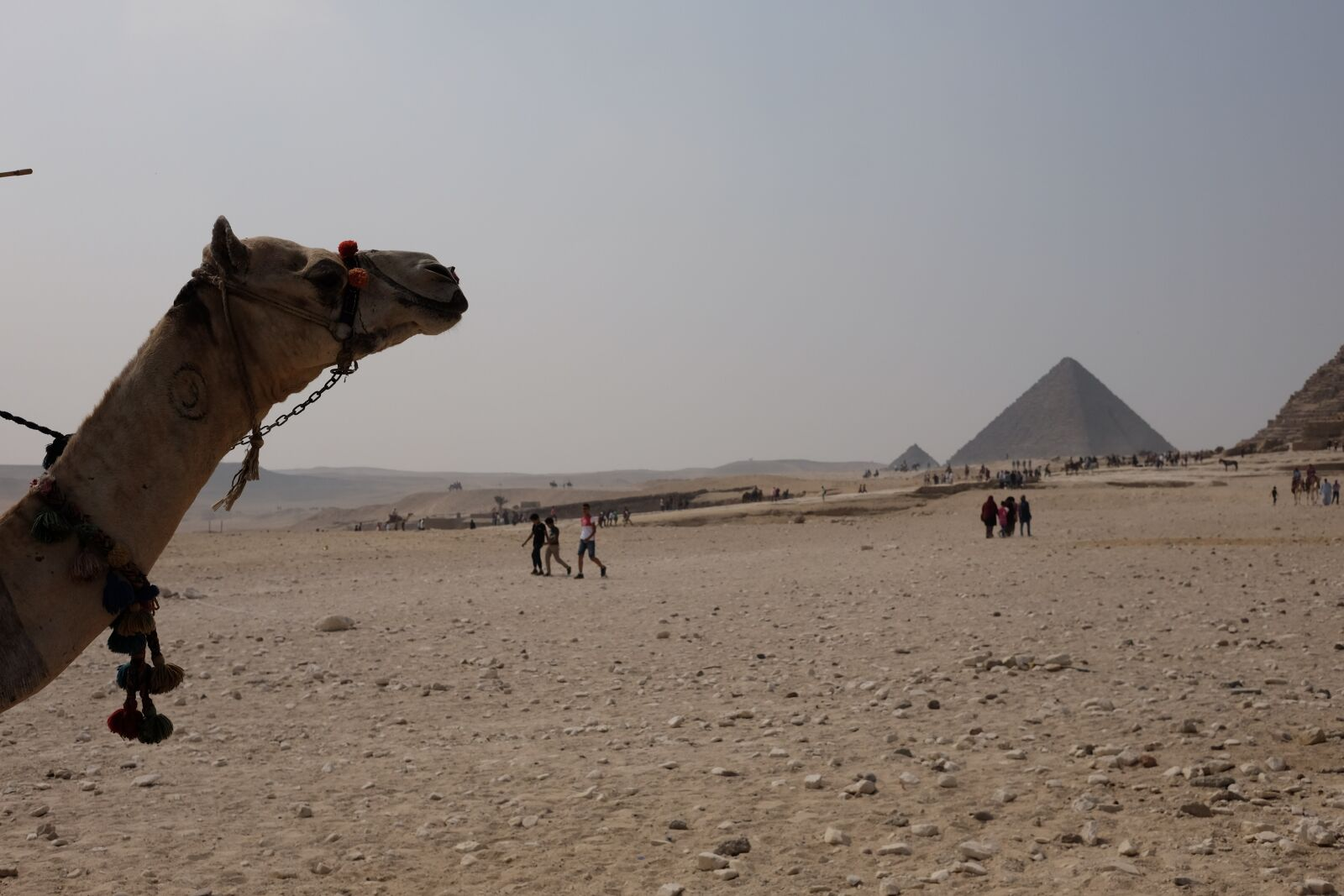 "Fujifilm X-T1 sample photo. ""Camel, egypt, pyramid"" photography"