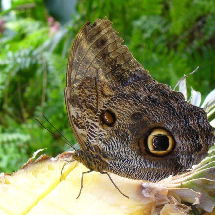 butterfly, eye, brown, Panasonic DMC-LZ5