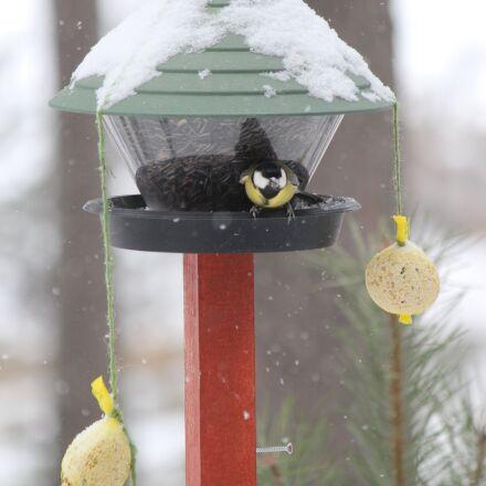 feeding the birds, great, Canon EOS 600D