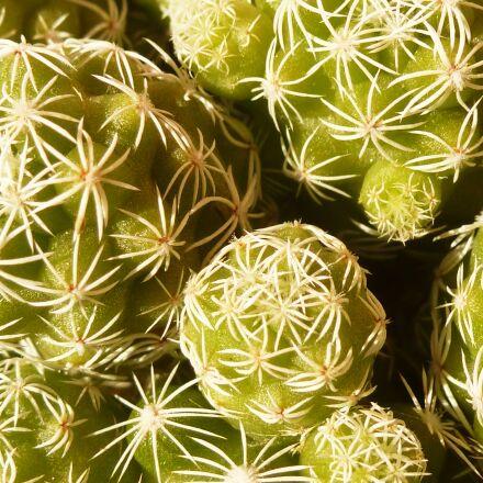 thorns, cactus, green, Panasonic DMC-TZ18