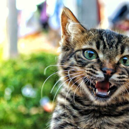 kitten, cat, pet, animal, Canon EOS 600D