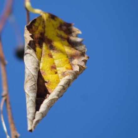 leaf, autumn, sky, Canon EOS 1100D