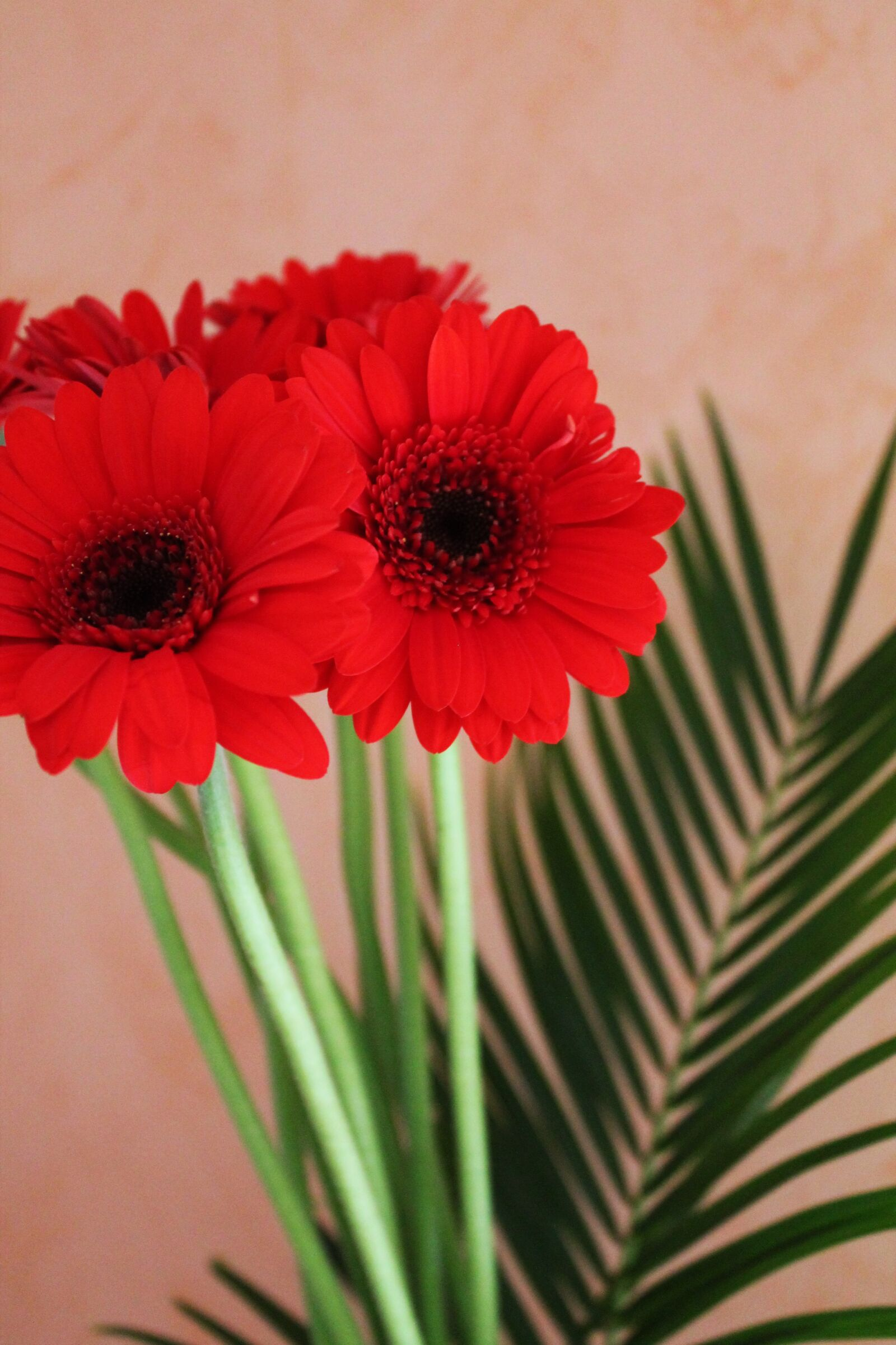 "Canon EOS 1100D (EOS Rebel T3 / EOS Kiss X50) sample photo. ""Gerbera, bouquet, flowers"" photography"
