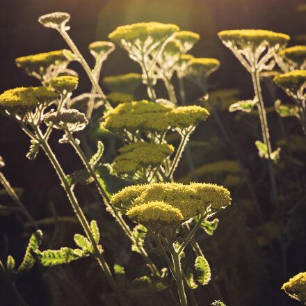 dark, death, flowers, garden, Nikon D750
