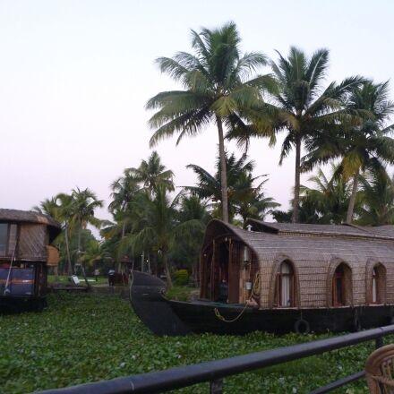 boat, swamp, tourism, palm, Panasonic DMC-TS2