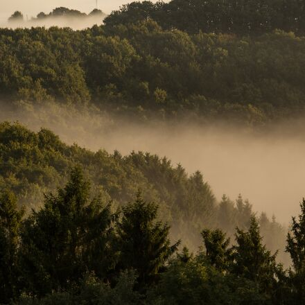 fog, forest, mountains, Canon EOS 6D