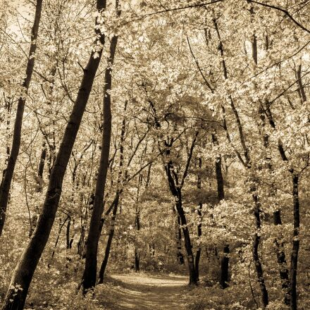 wood, trees, forest, Canon EOS 550D