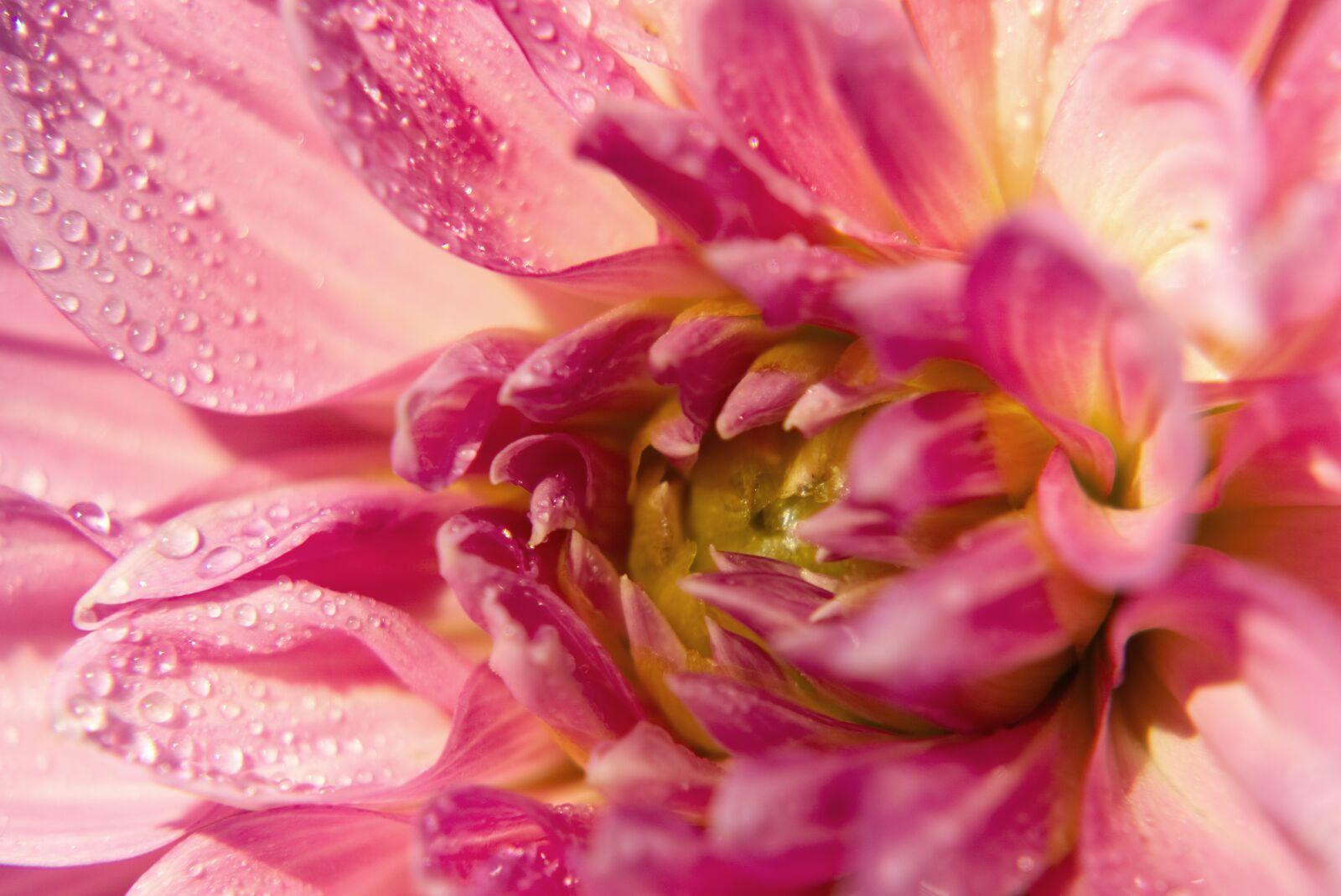 "Sony a6000 sample photo. ""Dahlia, blossom, bloom"" photography"