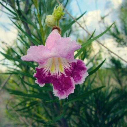 flower, purple, blossom, Canon POWERSHOT ELPH 100 HS