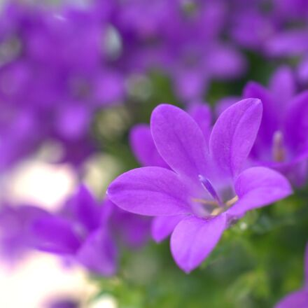 spring, flower, garden, Sony ILCE-6000