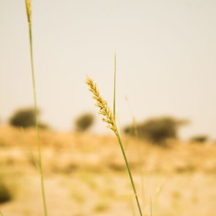 nature, field, grass, Canon EOS 70D