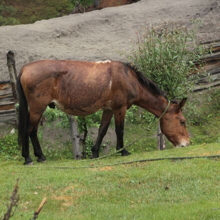 horse, grass, woods, Canon EOS REBEL T3I