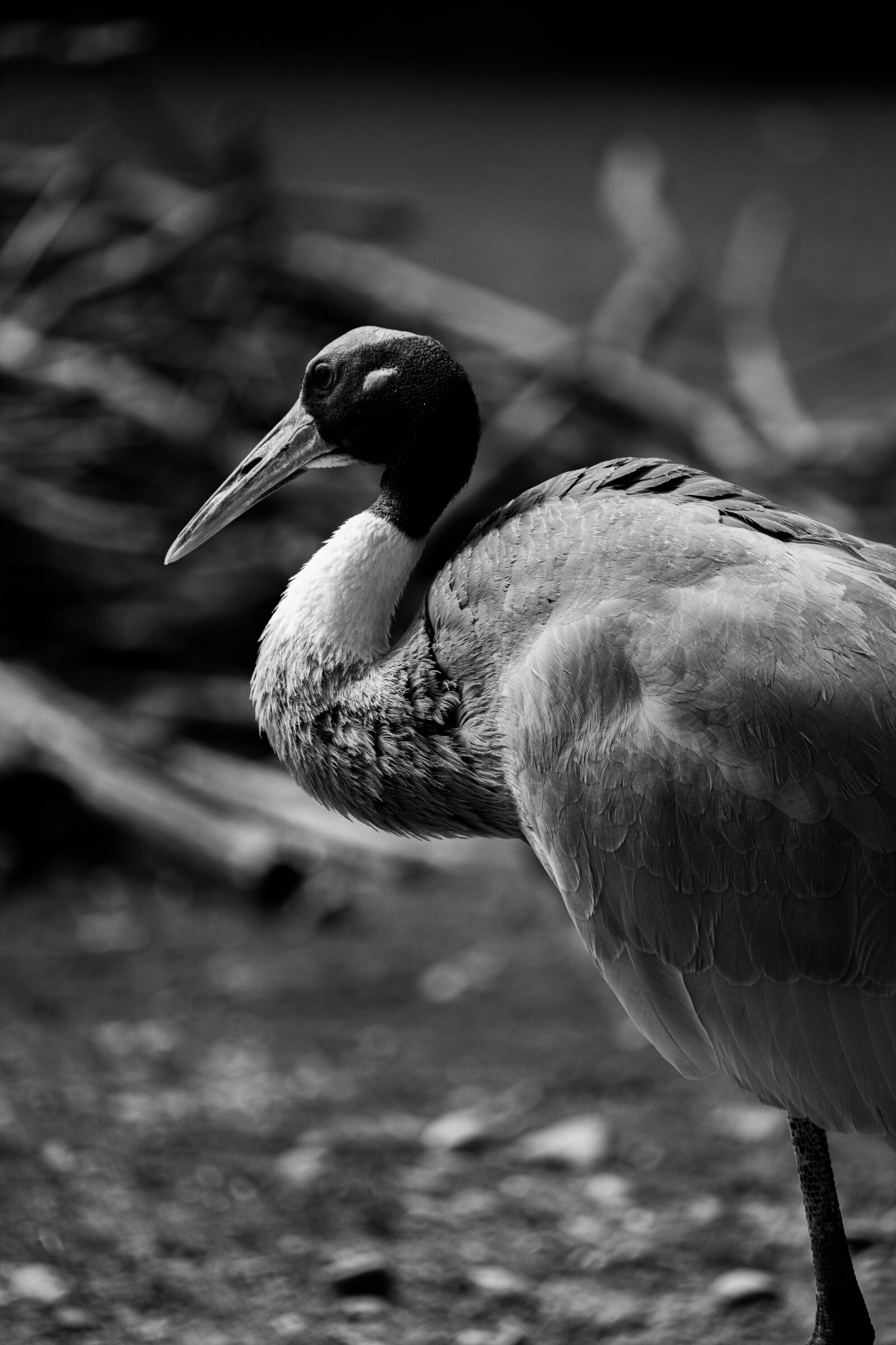 bird, africa, kenya
